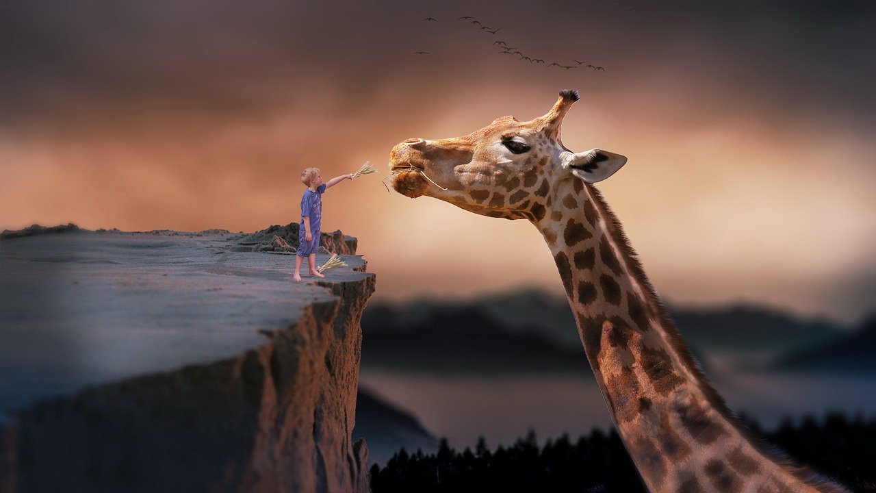 Zagadki o zwierzętach żyrafa