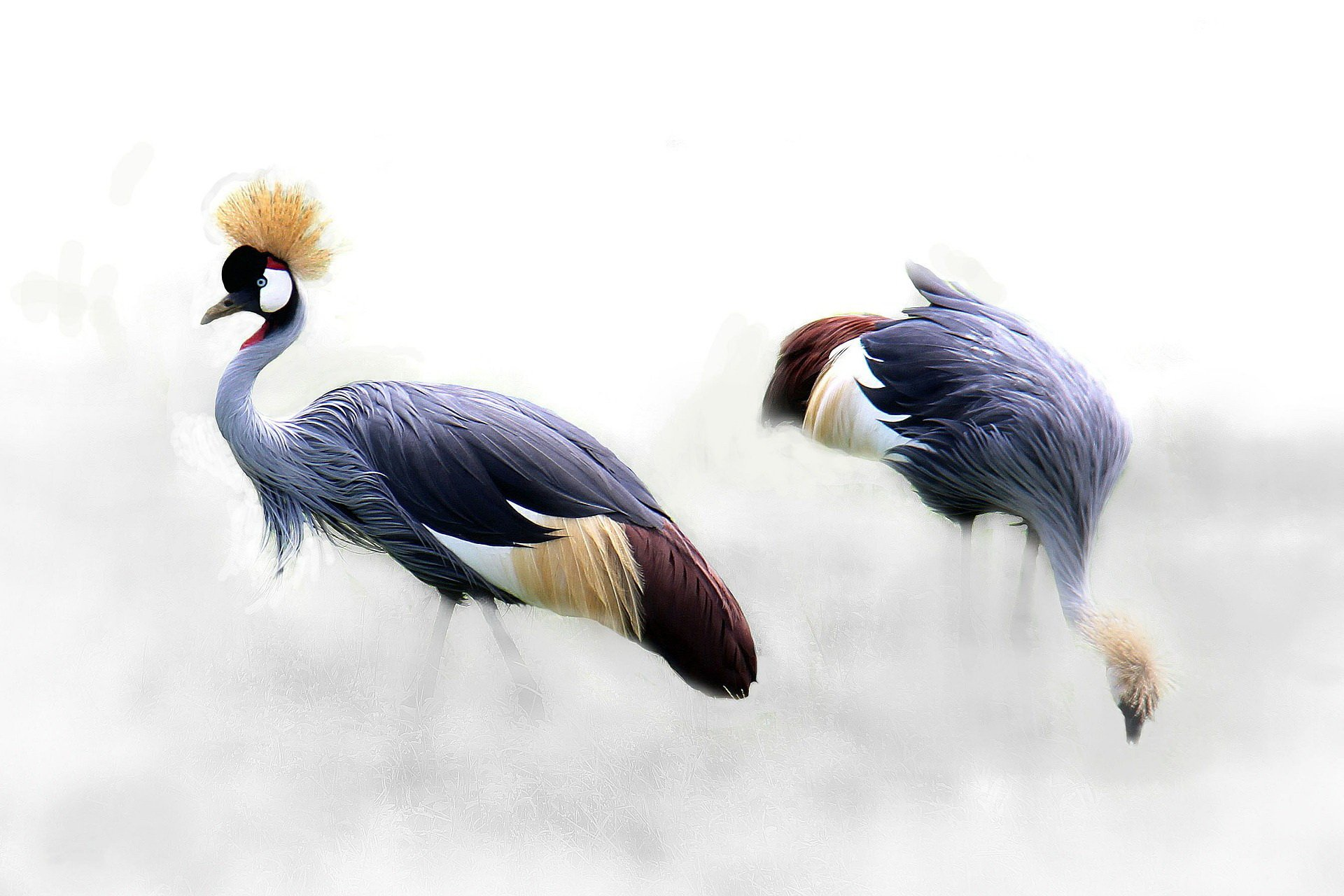 Zagadki o zwierzętach ptaki z odpowiedziami