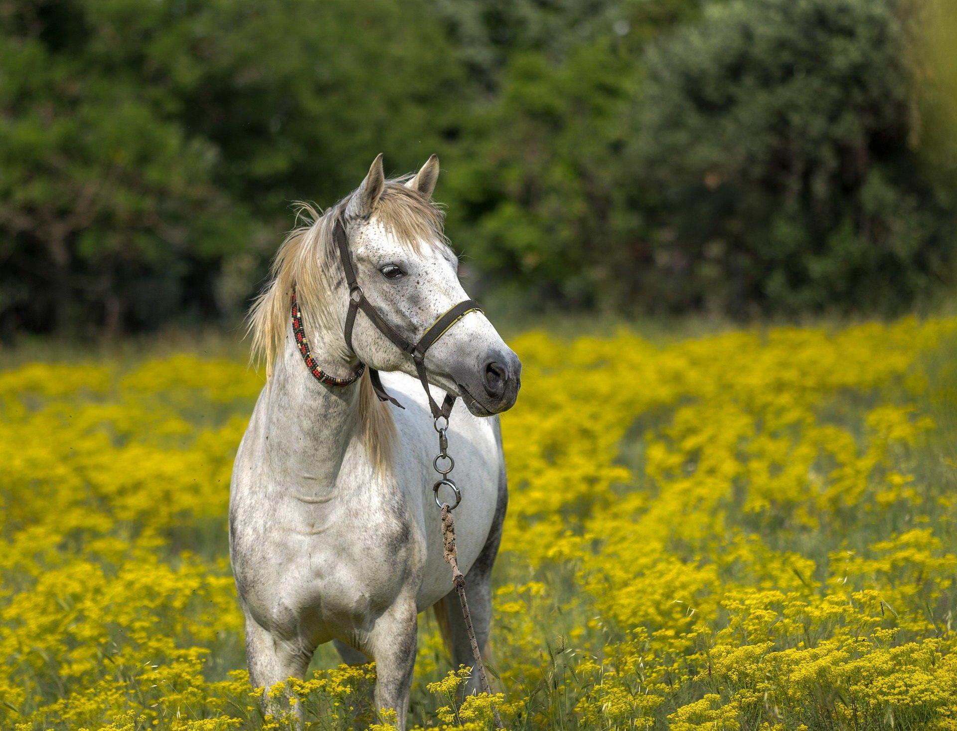 Zagadka logiczna dla dzieci o koniu