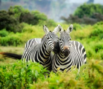 Zagadki dla dzieci o zwierzętach egzotycznych