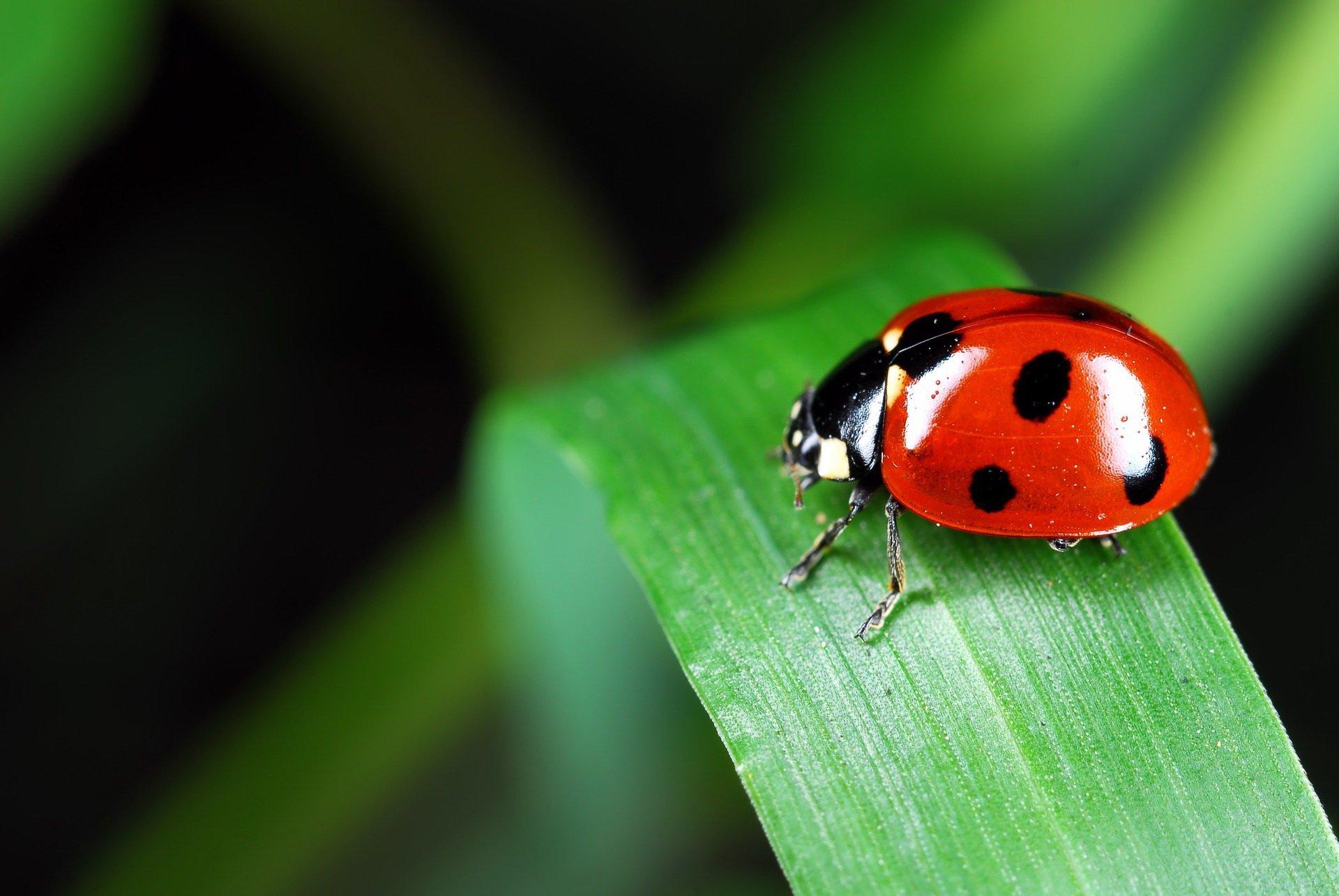 Zagadki dla dzieci o zwierzętach z odpowiedziami owady