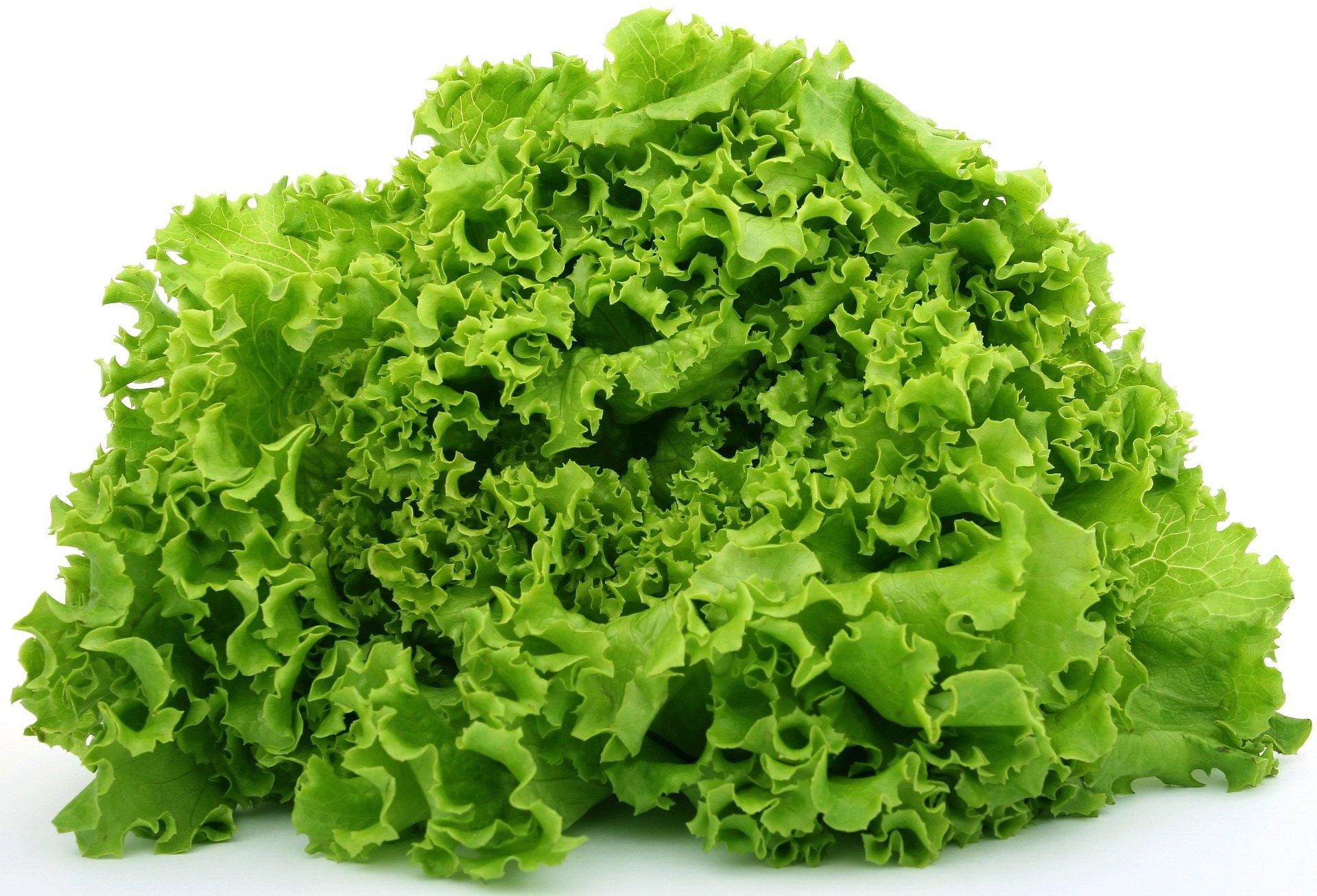 Zagadki dla dzieci z odpowiedziami warzywa