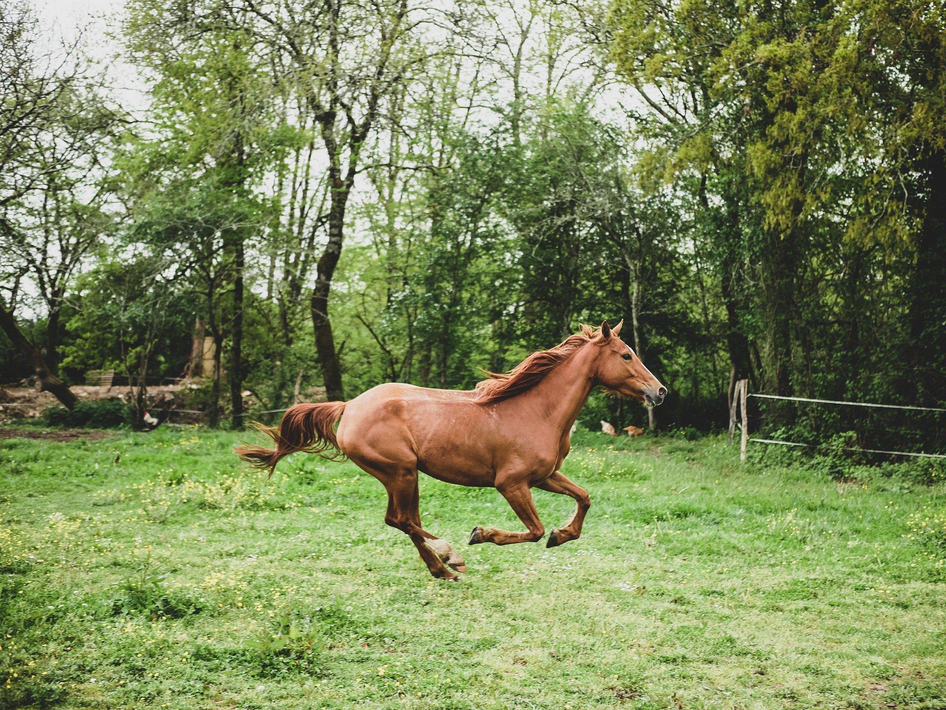 Śmieszna zagadka logiczna o koniu