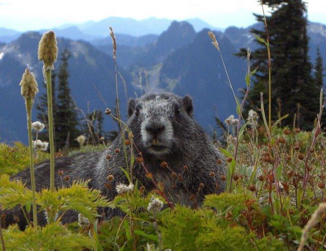 Zagadki z odpowiedziami o dzikich zwierzętach