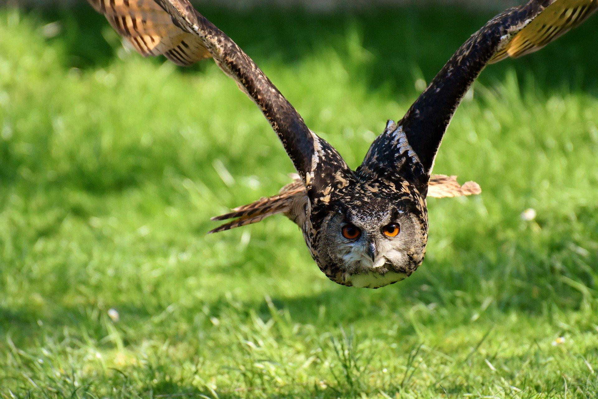 Zagadki dla dzieci o zwierzętach ptaki
