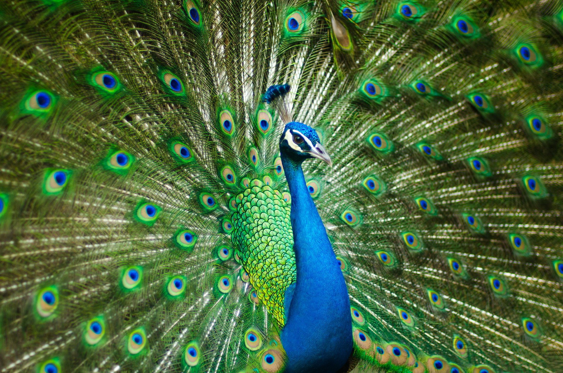 Paw zagadki o ptakach zwierzętach z odpowiedziami