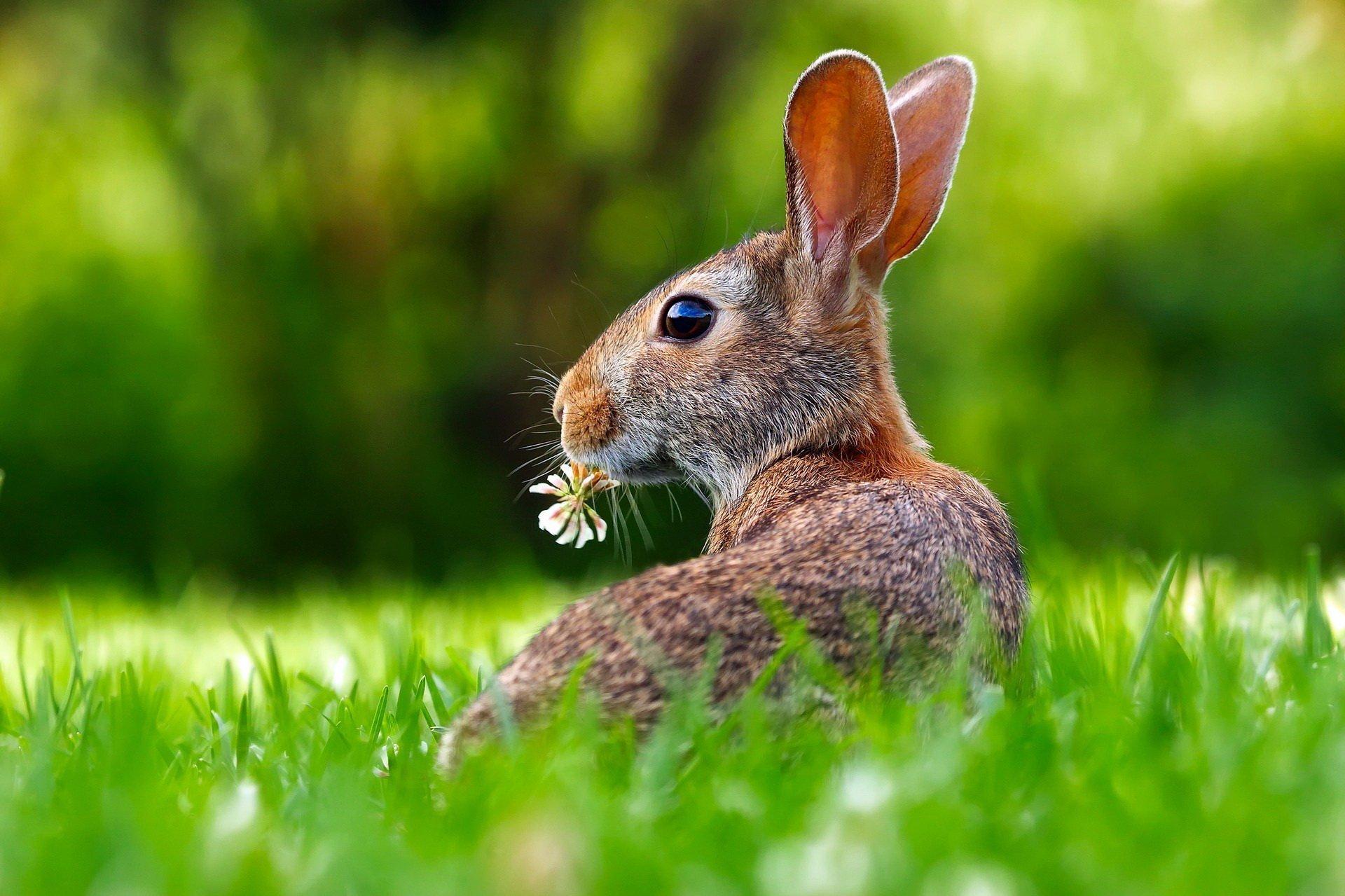 zagadki dla dzieci z odpowiedziami o zwierzętach na łące
