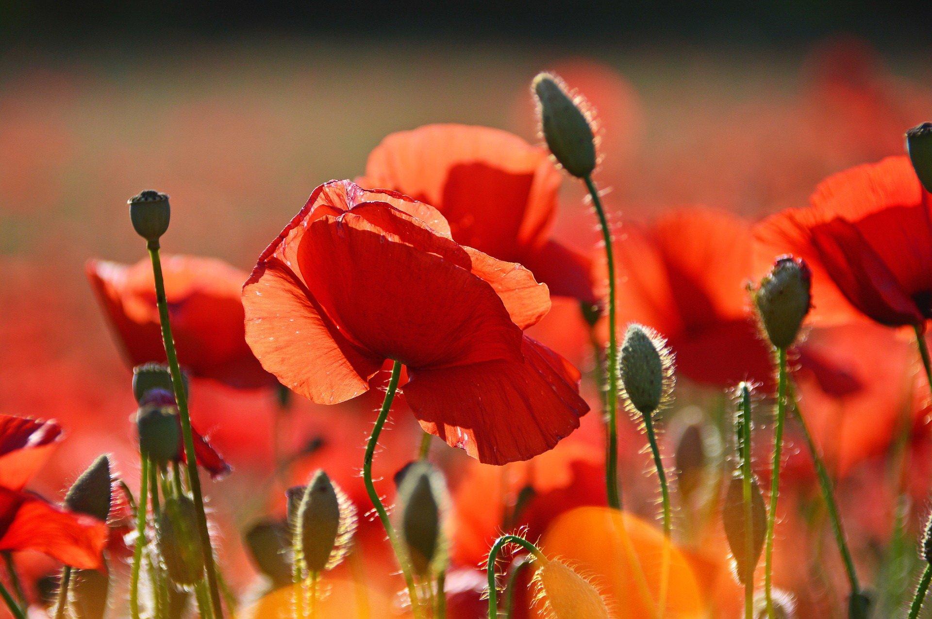 Zagadki dla dzieci z odpowiedziami kwiaty maki