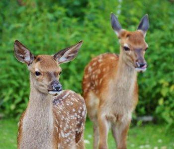 Zagadki dla dzieci o zwierzętach leśnych z odpowiedziami