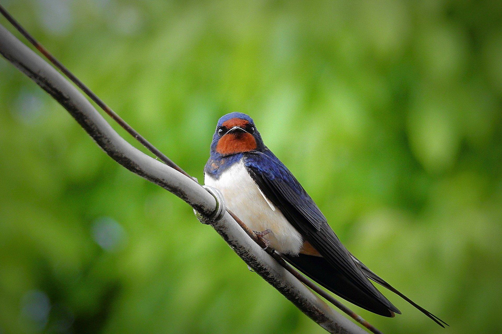 Zagadki o ptakach, zagadki o zwierzętach z odpowiedziami