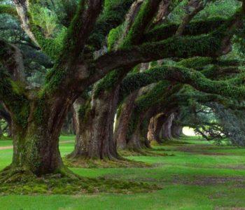 Wielkie drzewa naszych przodków – warsztaty. Pszczyna