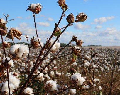 Drugie życie bawełnianej koszulki - warsztaty ekologiczne