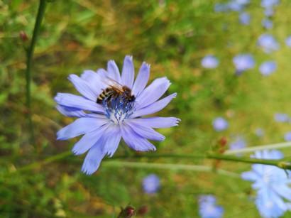 Dzień Pszczół - warsztaty i pokazy