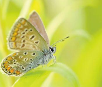 Zagroda motyli – wspólna akcja budowania oazy dla motyli