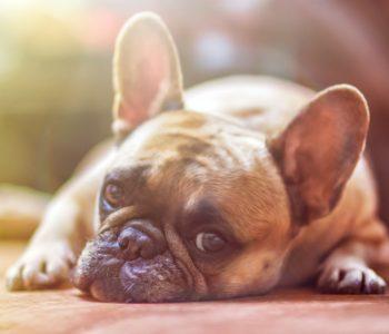 Zwierzogród Warszawski: Ja chcę mieć psa!