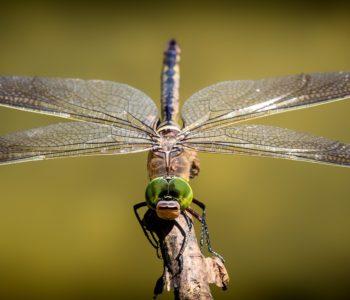 Wakacyjne spotkania z przyrodą – warsztaty przyrodnicze