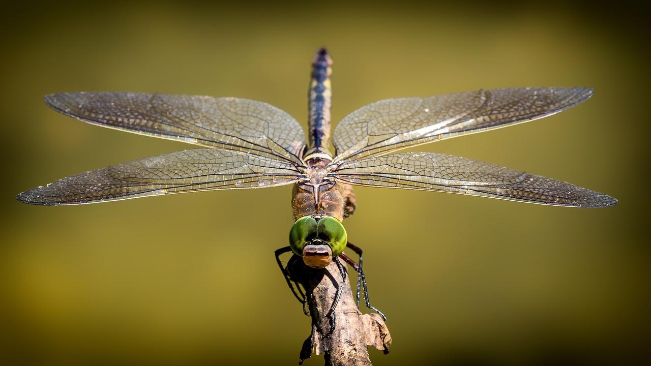 Wakacyjne spotkania z przyrodą - warsztaty przyrodnicze