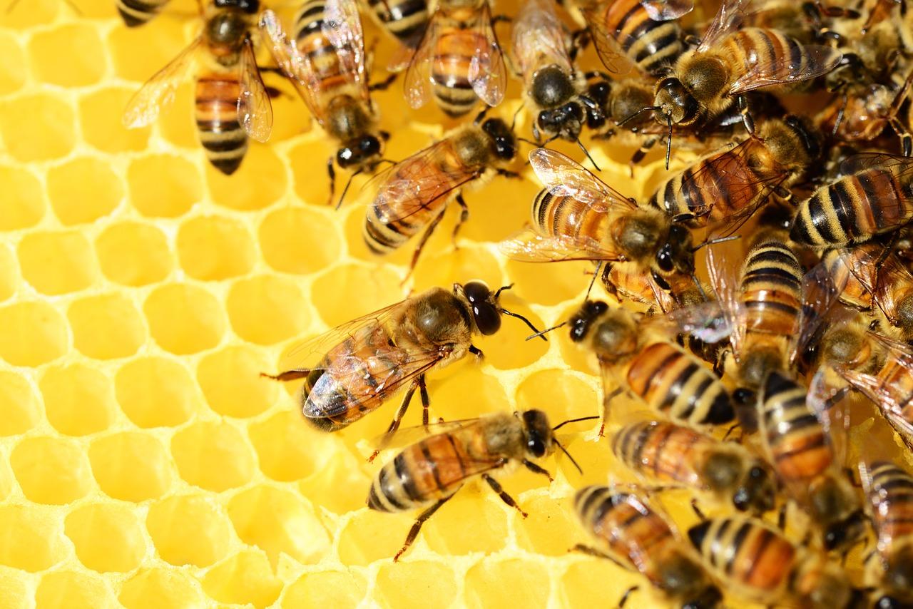 Dzień Pszczół. Projekcja filmu: Więcej niż miód