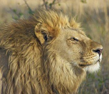 Opowieści Afryki – Łowcy Słów