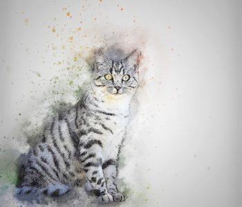 Historia kota, ale nie w butach