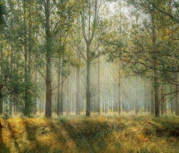 Wakacje z przyrodą i przygodą - Leśne domy