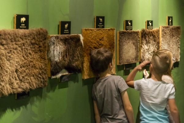 Zwierzęce zmysły – warsztaty dla dzieci. Bytom