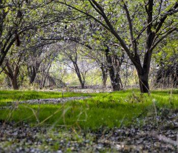 EkoPIKNIK w Wiśniowym Sadzie
