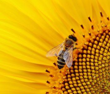 Ogólnopolski Dzień Pszczół 2019 w Palmiarni