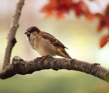 Ptaki w Kokoszkach - las przy Goplańskiej