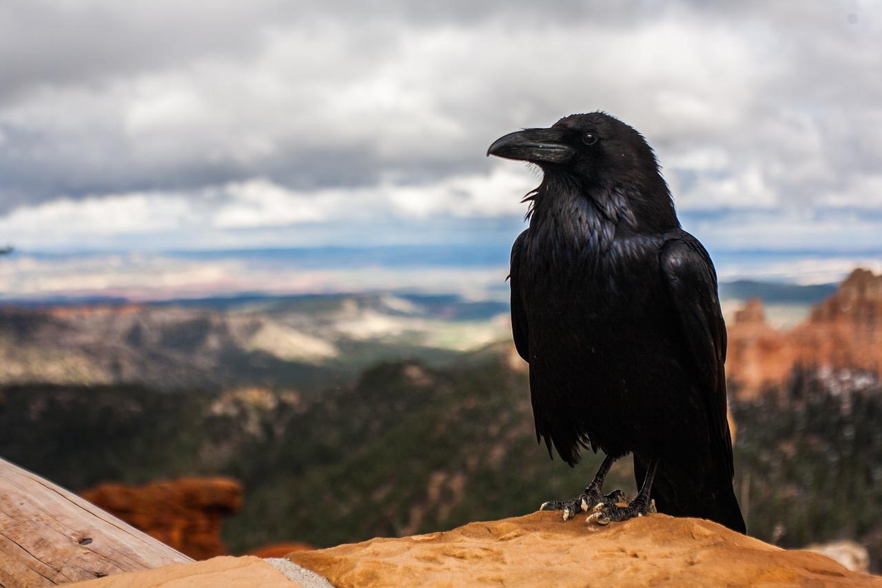 Ptasi móżdżek - czyli jak to jest z ptasią inteligencją? Pokaz naukowy