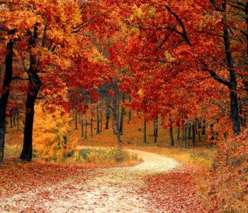 Warsztaty plastyczne inspirowane jesienią
