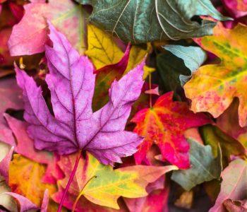 Dzień spadających liści -spotkanie z Panią Bajką
