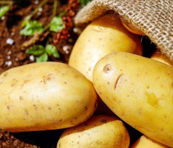 Dzień Ziemniaka. Rodzinny piknik na Zaciszu