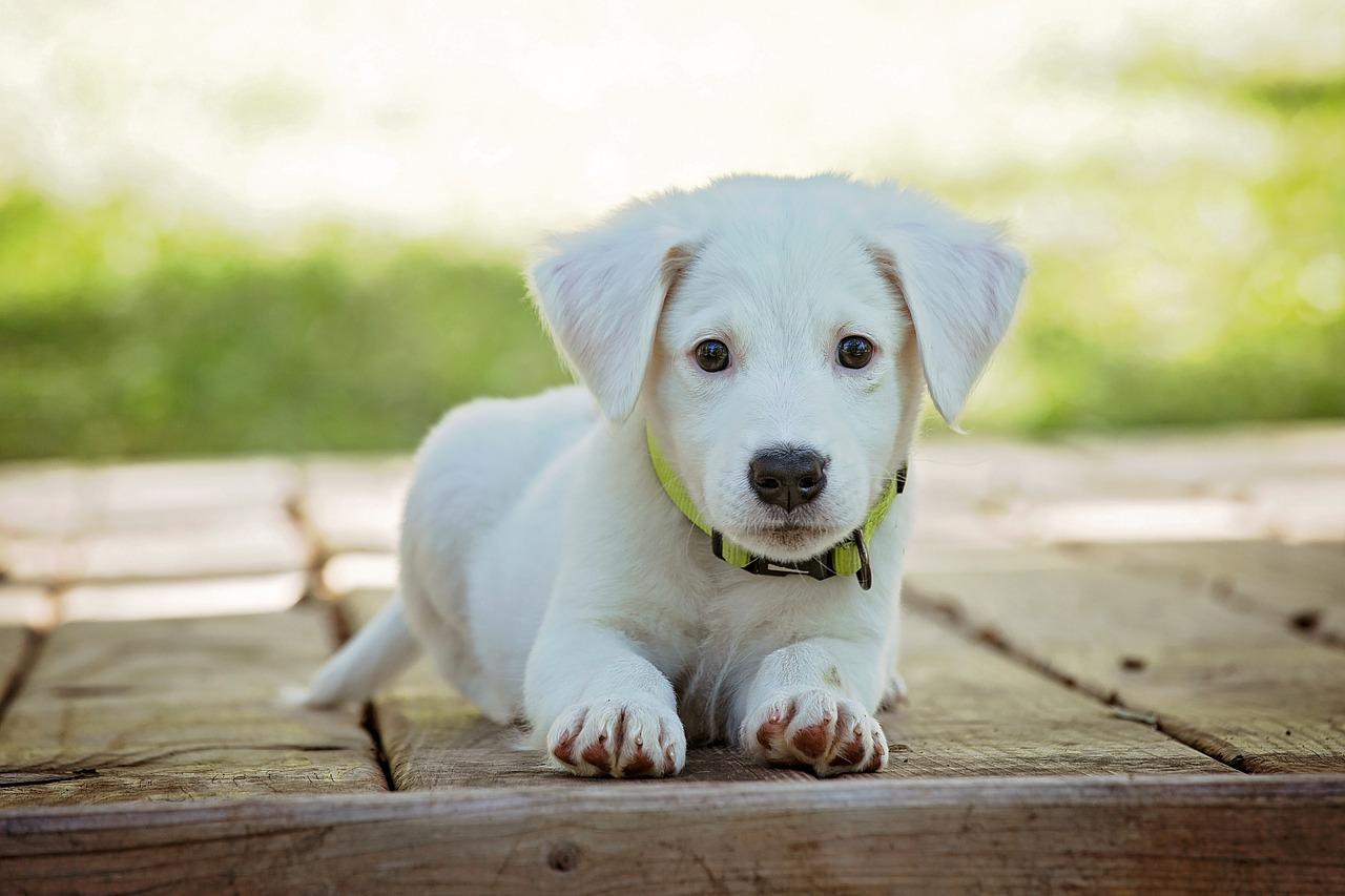 Pies to nie zabawka - spotkanie z Panią Bajką
