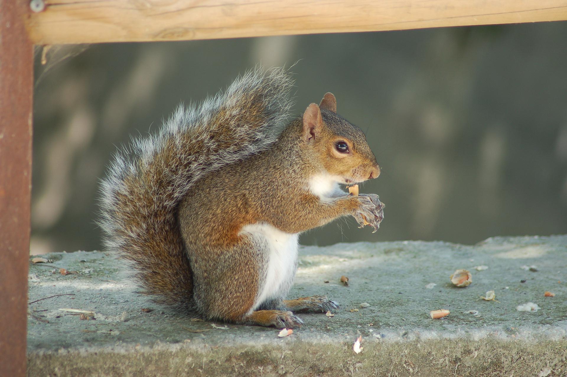 łatwe zagadki matematyczne zagadka o wiewiórkach