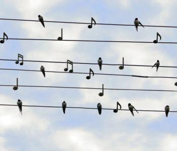 Mikołajkowe warsztaty wokalne