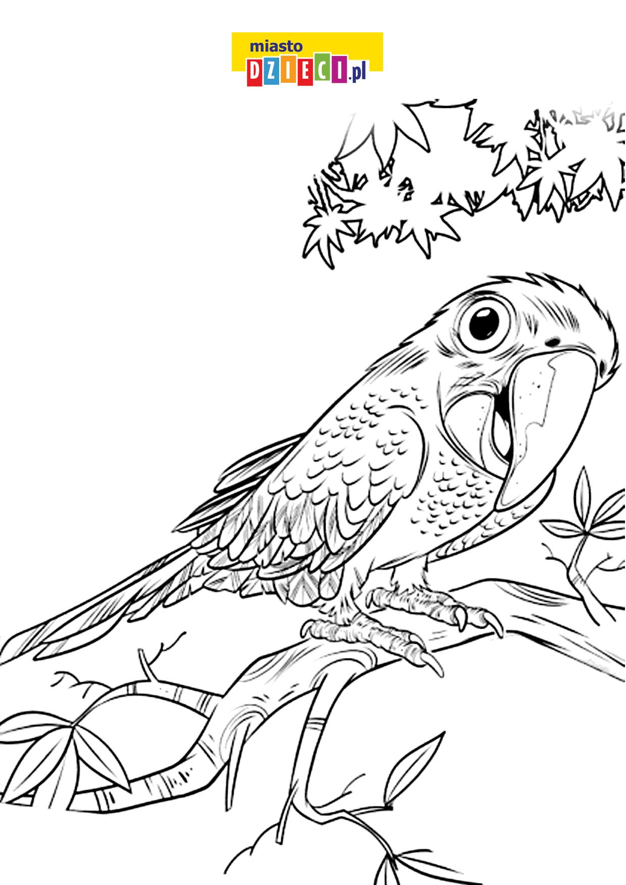 kolorowanka do druku papuga