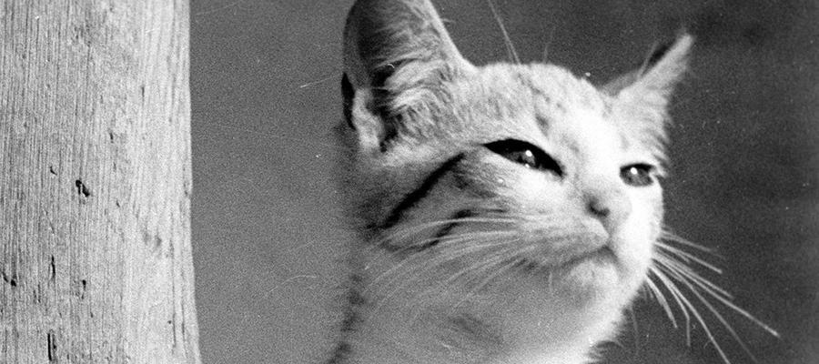 Ale kino! Najnajmłodszego widza: Psotny kotek