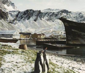 Pingwiniątka i białe misie – warsztaty polarne dla dzieci