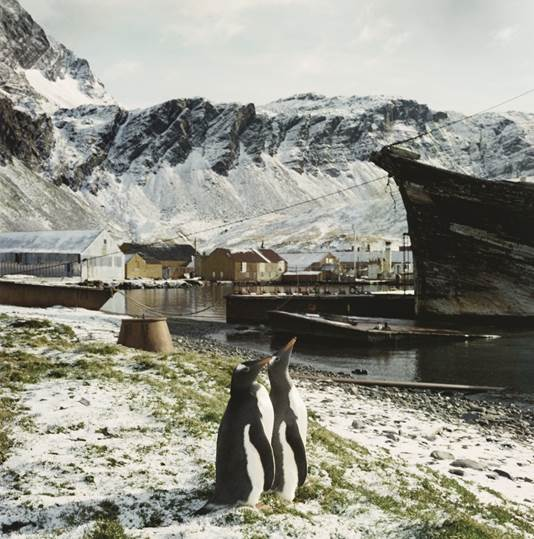 Pingwiniątka i białe misie - warsztaty polarne dla dzieci