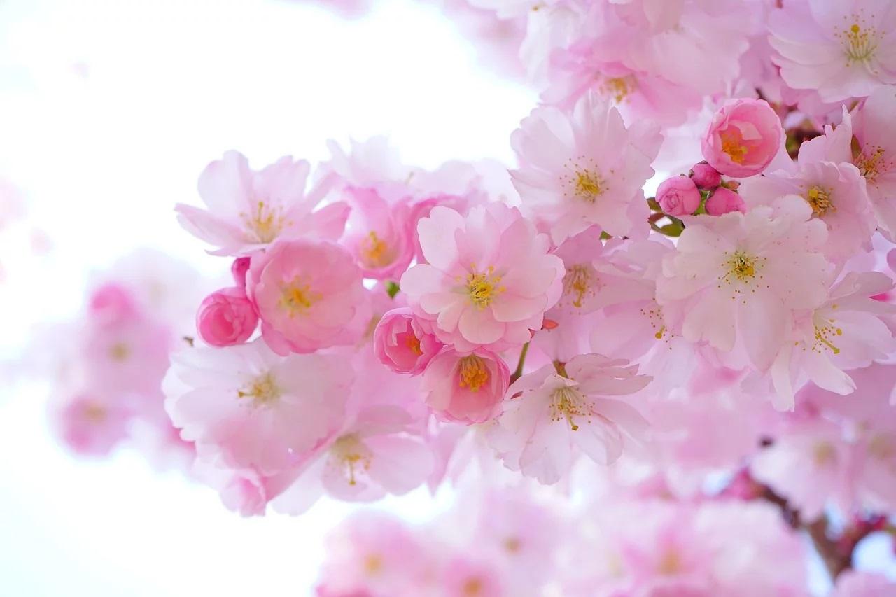Leniwa niedziela… z powitaniem wiosny