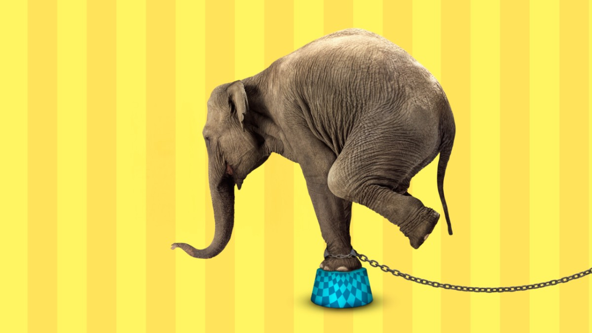 W obronie słoni plakat