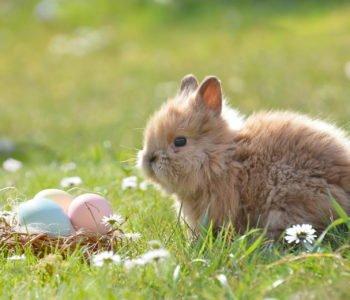krótkie życzenia na Wielkanoc dla dzieci