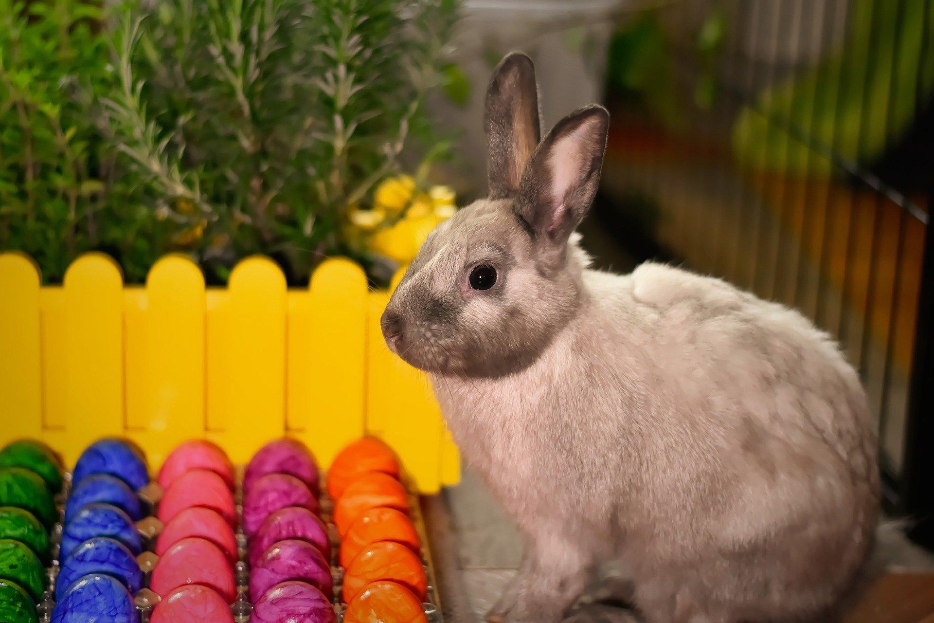 Wielkanocne zagadki dla dzieci zabawne zagadki logiczne