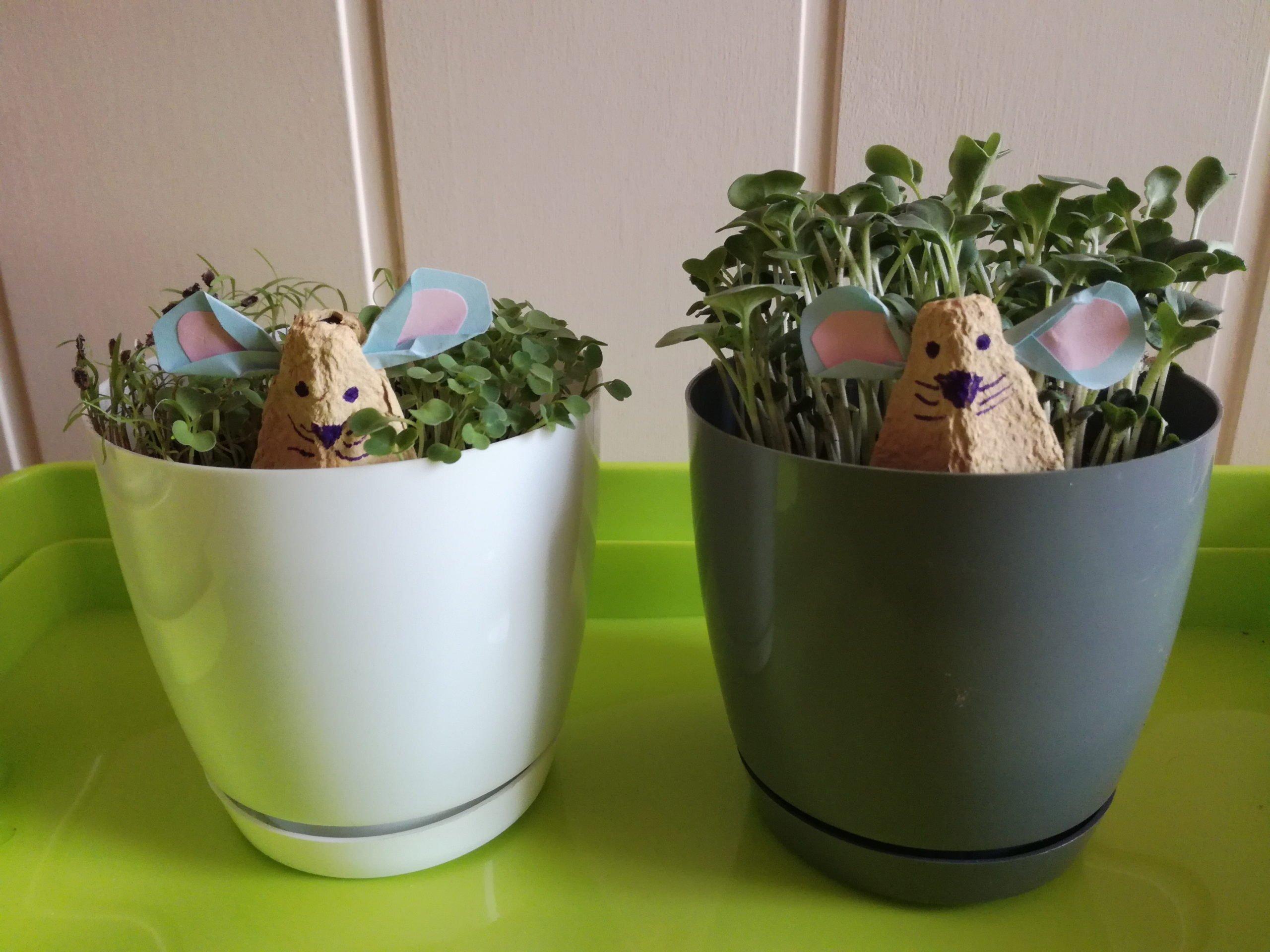 Myszki z pojemników po jajkach, zabawy plastyczne DIY dla dzieci