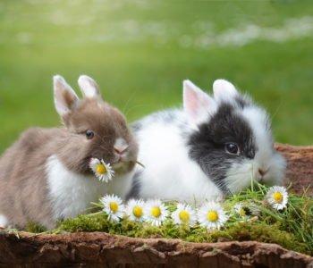 Niech Święta Wielkanocne upłyną w spokoju