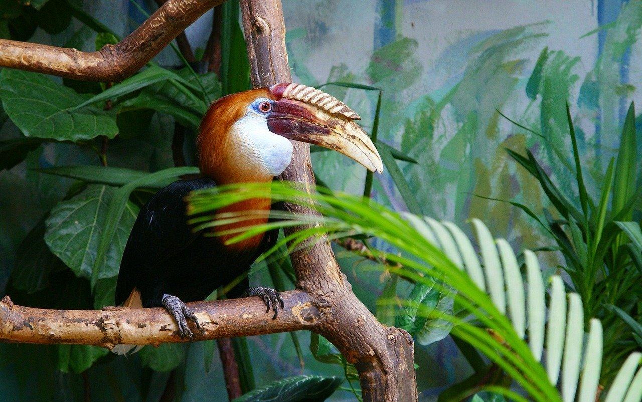 zoo warszawa tukan