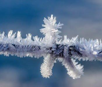 Czy potrzebna jest zima?