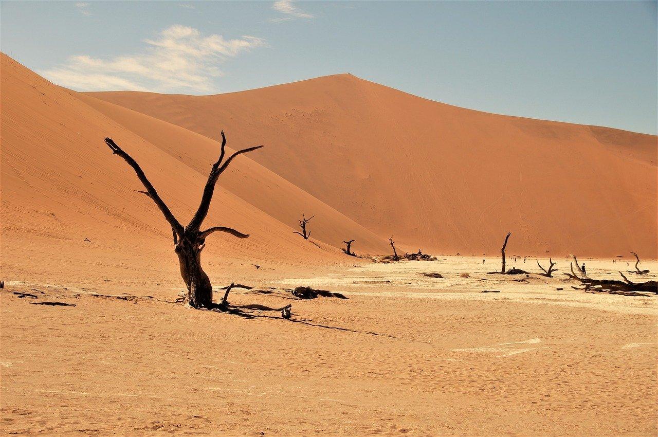 Pustynne wydmy Namib, Namibia