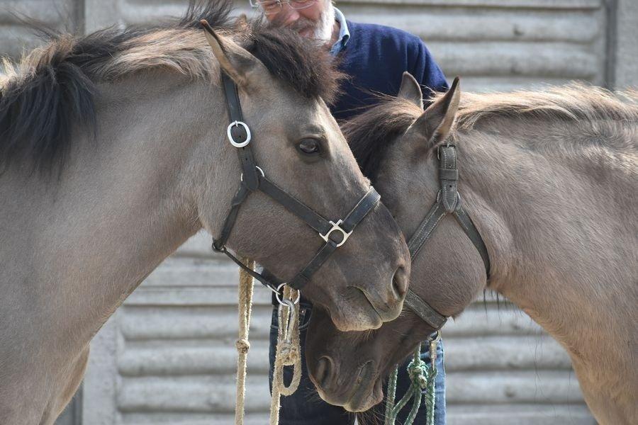 Weekend ze zwierzętami gospodarskimi w Muzeum Narodowym Rolnictwa w Szreniawie